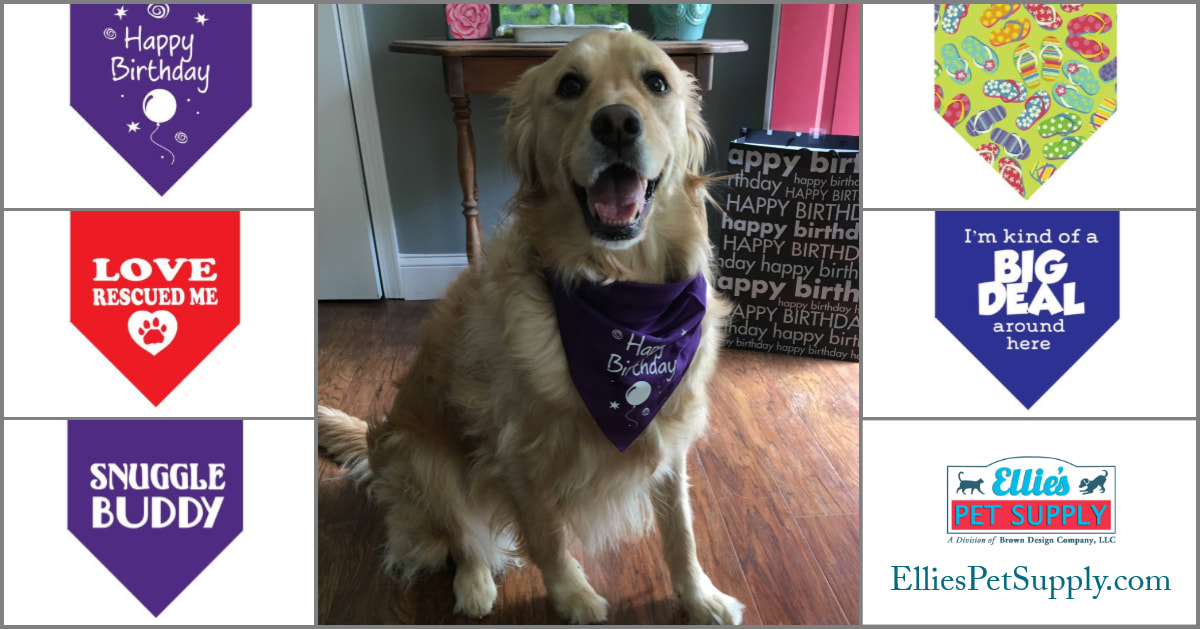 Fun Dog Bandanas in bright colors, funny and cute. Happy Birthday, Rescue Dog, I'm kind of a Big Deal around here, Flip Flop Fun, Snuggle Buddy, Loved and Blessed and more!