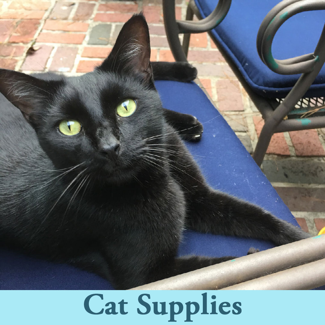 Shop Cat and Kitten Supplies at Ellie's Pet Supply