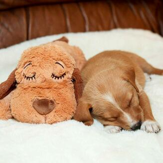 Snuggle Puppy New Puppy Starter Kit